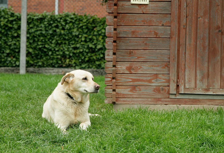 Le Domaine d'Aubrac - Pension pour chiens Liège